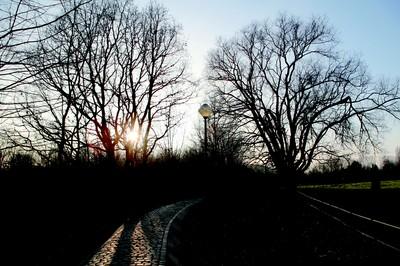 Photo du bois du Laerbeek