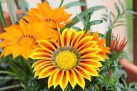 Oranje gele bloemen